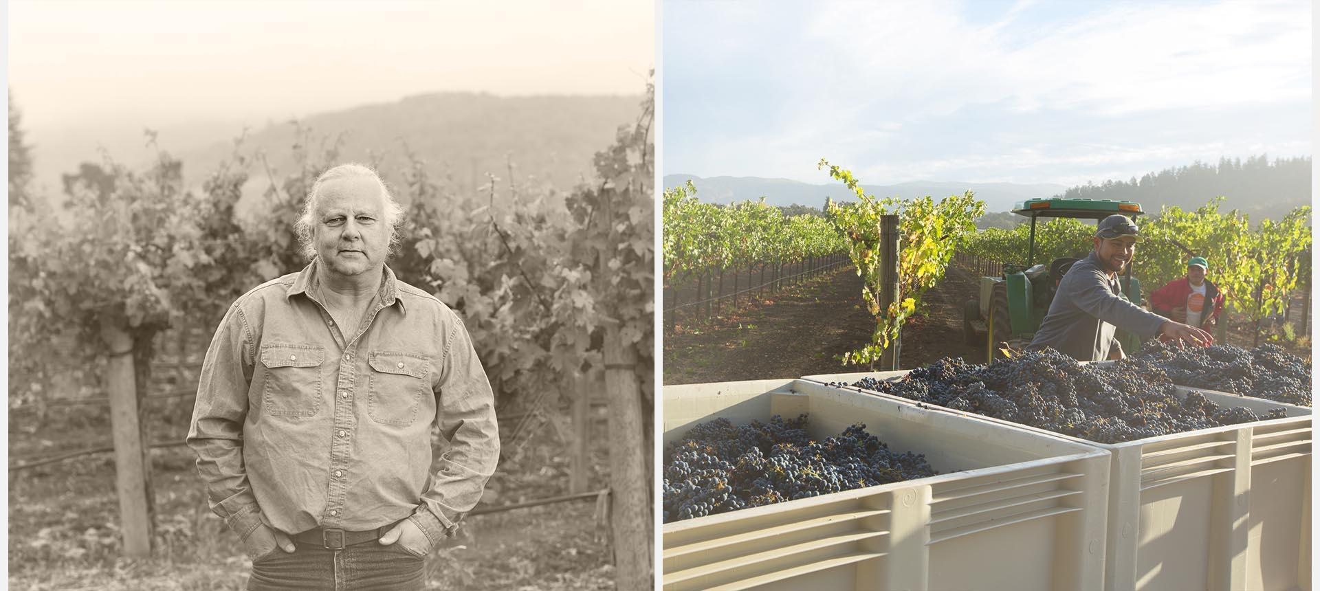vineyards-3