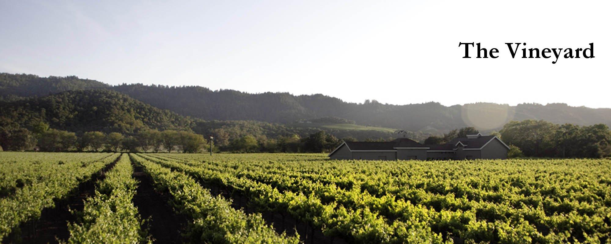 vineyards4x